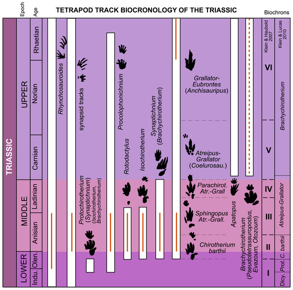 Stratigraphic distribution of tetrapod track ichnotaxa and form groups in the Triassic with the global biochrons compared with the Iberian record. The global biochrons are based on Klein & Haubold (2007) and Klein & Lucas (2010a).