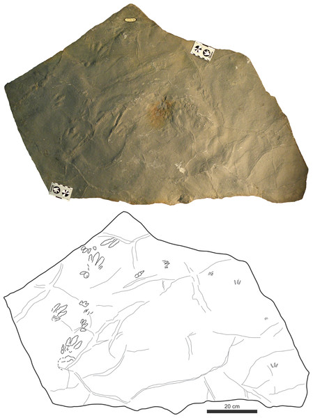 Picture and sketch map of slab CS.DA.38.