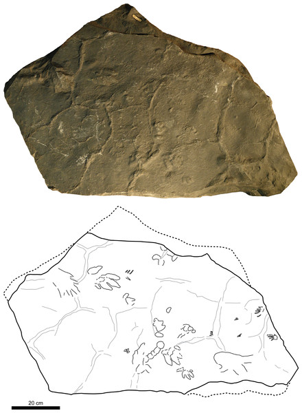 Picture and sketch map of slab CS.DA.39.