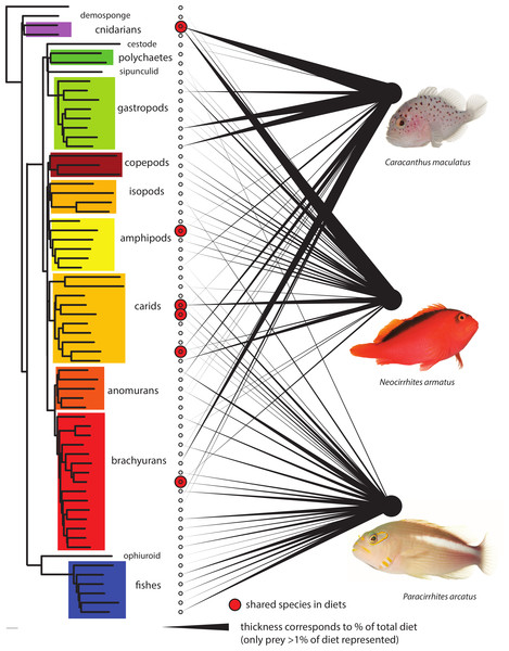 Dietary partitioning among the three predatory fish species.