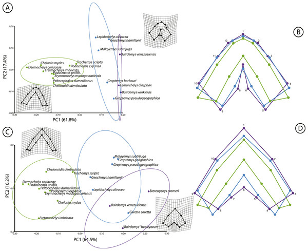 Results of the geometric morphometric analyses.