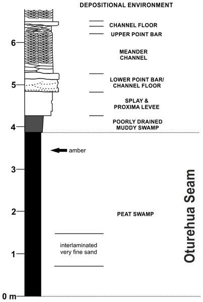 Diagrammatic representation of the exposure at the former Idaburn Coal Mine, Otago, southern New Zealand, showing where the amber was collected, with an interpretation of the depositional environment, redrawn from Lee et al. (2003) with permission.