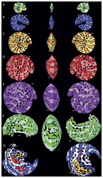 Chamber shape per whorl in specimen 06KW01_05.