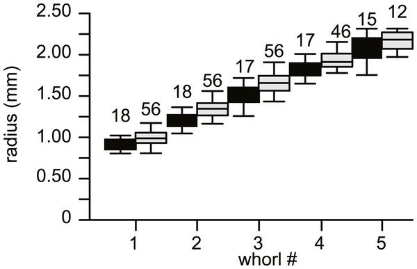 Average diameter of the whorls in 74 specimens of Nummulites djokdjokartae.