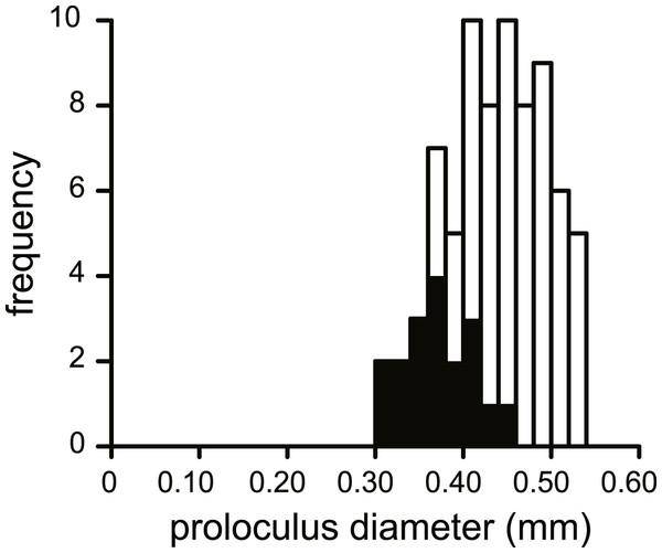 Histogram of the proloculus size in N. djokdjokartae.