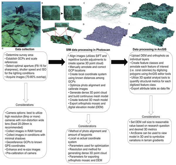 Primary steps of the SfM workflow for three-dimensional reconstruction of the benthic substrate.