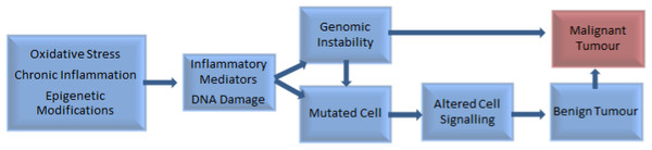 Factors involved in the pathogenesis of tumour development (Pantuck et al., 2006; Waris & Ahsan, 2006).