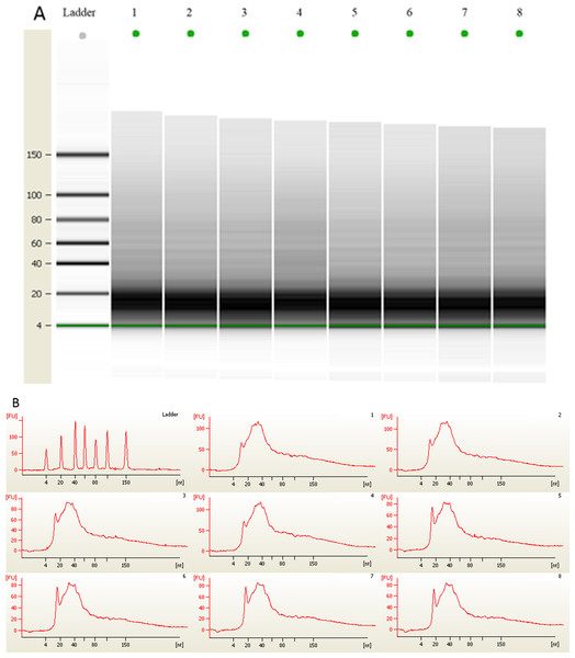 (A) Gel electrophoresis analysis of small RNA fractions on an Agilent small RNA chip. (B) Fluorescence intensity of small RNA fractions at various sizes (nt).