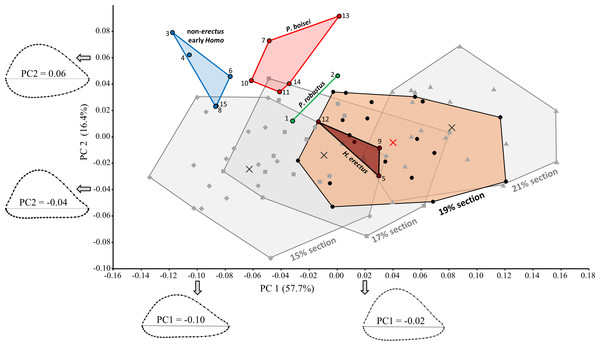 PCA results for the main fossil study group combined with modern humans (at four different section locations).