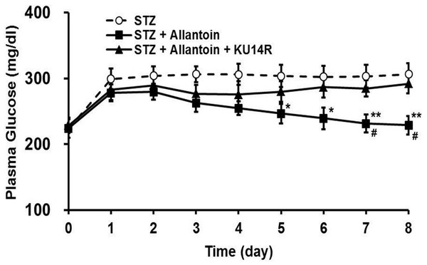 Effects of allantoin and KU14R on blood glucose levels in streptozotocin (STZ) -treated rats.