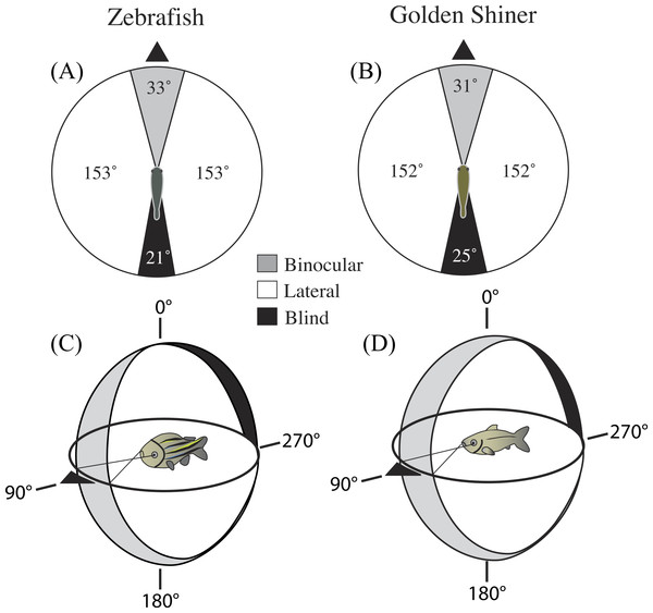 Visual field configuration of the (A) zebrafish and (B) golden shiner in the two-dimensional horizontal plane of the head (90°–270°).