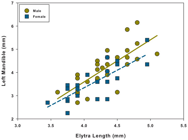 Scatter plot and linear regression between elytra length and left mandible for males and females.