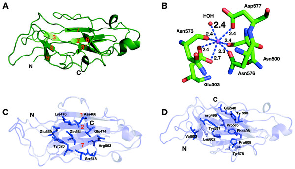 Structure of the CBM3c of Cel9I from C. thermocellum.