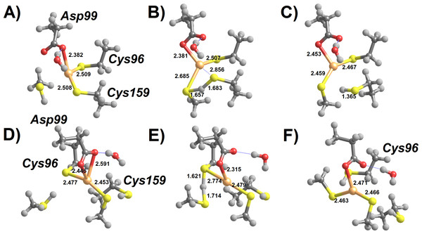 Cys-assisted thiol addition to Hg2+.