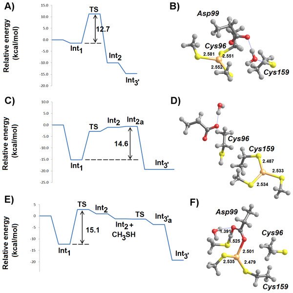MP2/CBS//B3PW91/6-31G(d) energetic profiles (with ε = 20) and representative structures of intermediates arising from attack of Hg2+ by a thiol and a thiolate.