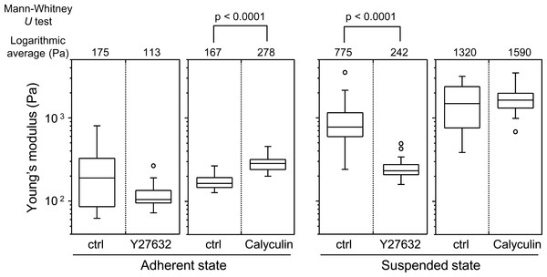 Elastic responses of adherent and BAM-anchored suspended cells following treatment with Y27632 and calyculin A.