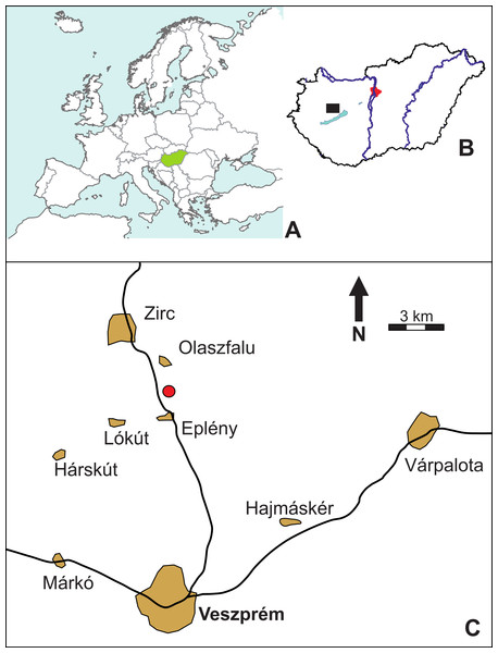 Location map (red circle) of the Mesoeucrocodylia indet. tooth (MFGI V 2015.90.2.1.), found between the villages of Olaszfalu and Eplény in the Bakony Mountains, western Hungary.