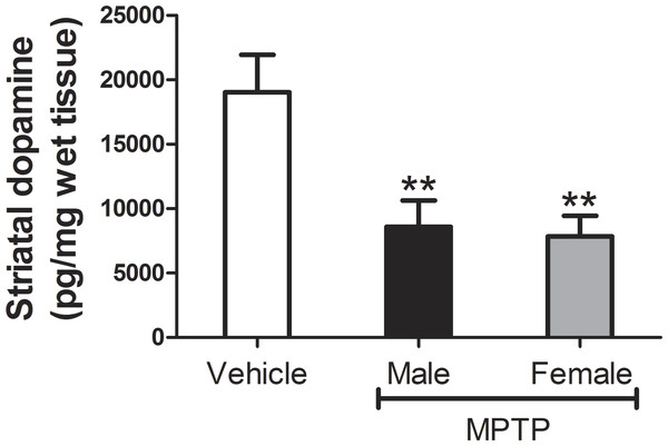 Measures of striatal DA levels in male and female mice.