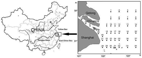 Location of study area and sampling stations of ichthyoplankton in Yangtze Estuary.