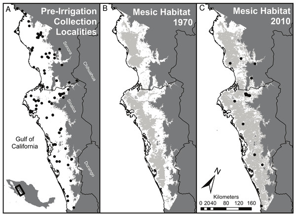 Summary of habitat changes for regions of southern Sonora and northern Sinaloa below 200 m elevation.