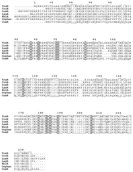 Multiple sequence alignment of CneR, C. neteri SSMD04 orphan LuxR (Orphan) with five other canonical QS LuxR-type proteins.