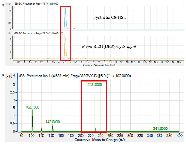 Mass spectrometry analysis of E. coli BL21(DE3)pLysS::ppnI.