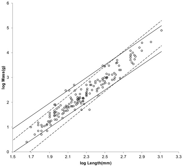 Log body mass as a function of log head and body length for non-cricetid rodents.
