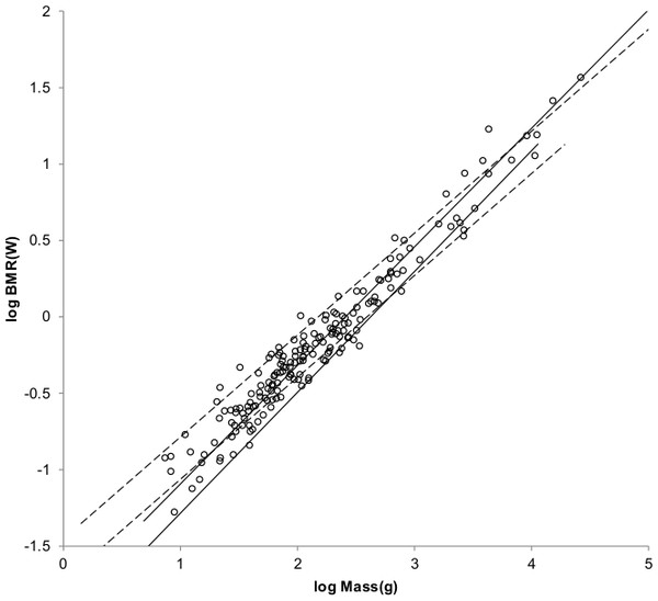 Log BMR as a function of log body mass for non-cricetid rodents.