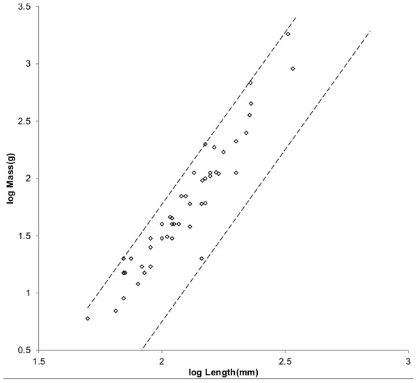 Log body mass as a function of log head and body length for Cricetidae.