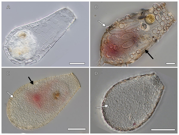 Examples of arcellinids shell composition.