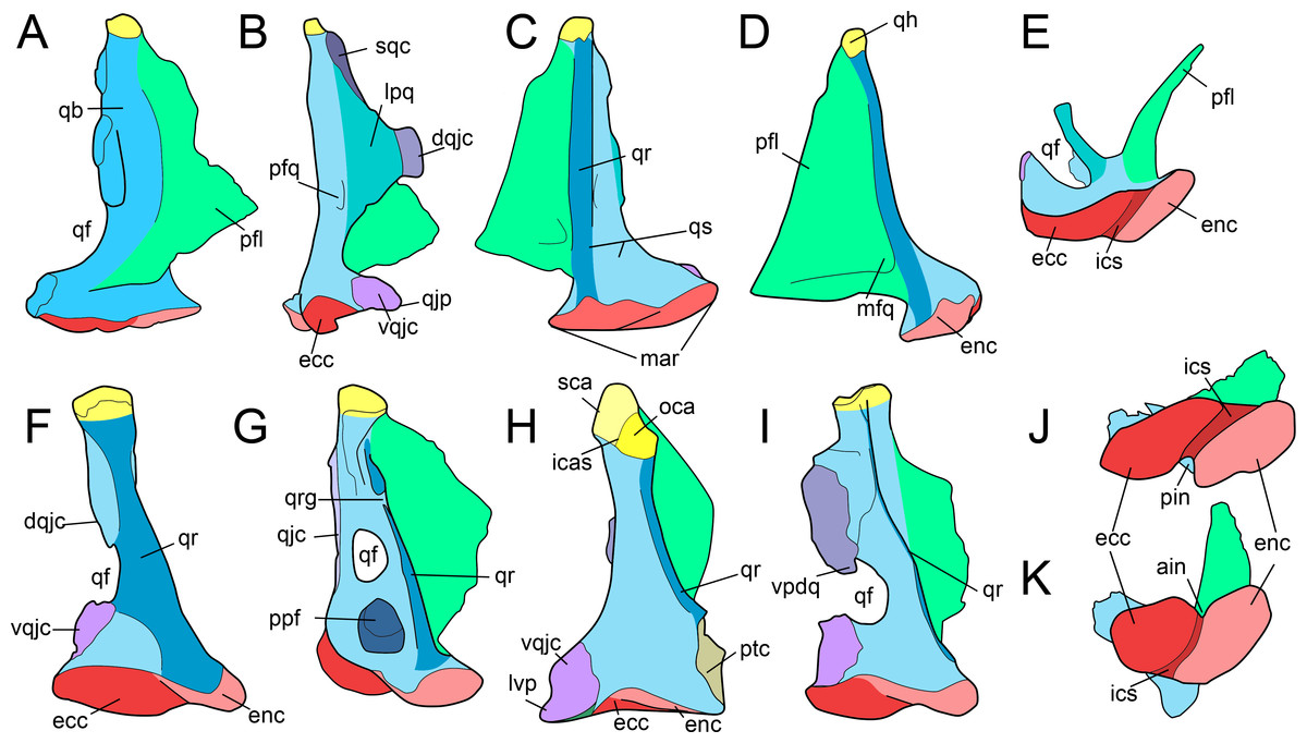 The non-avian theropod quadrate I: standardized terminology with an ...