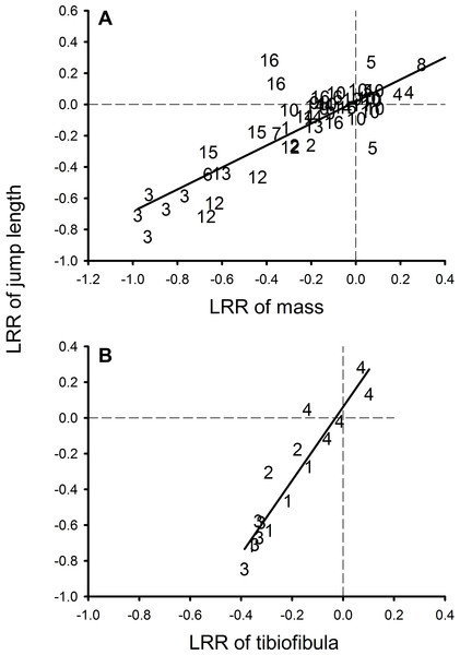 Relationship between log response ratio of mass and log response ratio of jumping performance in the meta-analysis.