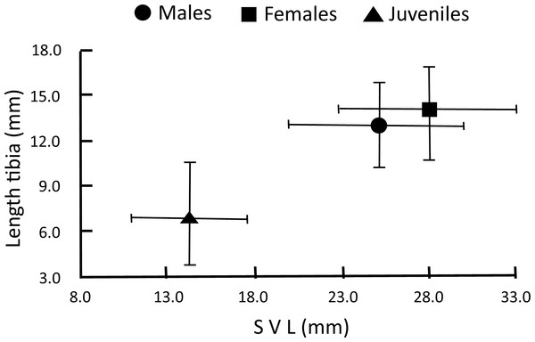 Age-sex categories of H. eximia defined by the generalized analysis of k-means on sex-body size.