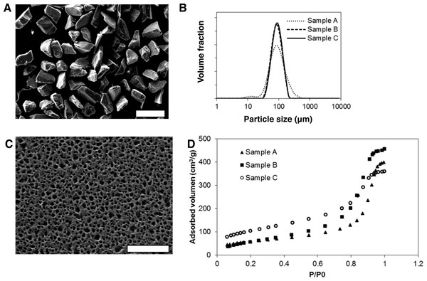 Morphological and physicochemical properties of mesoporous silicon microparticles (MS-MPs).