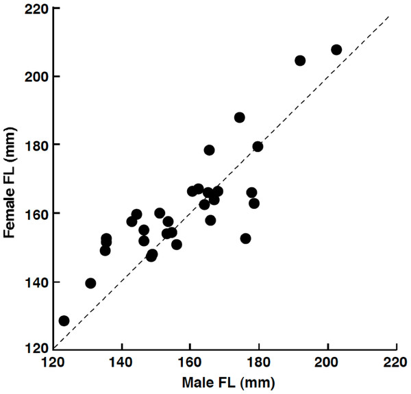 The relationship between male fork length (FL) and female FL for heterosexual pair individuals of Siganus unimaculatus.