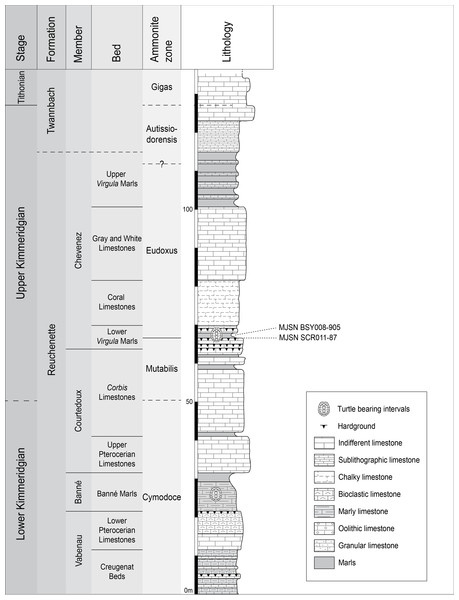 Stratigraphic section of the Reuchenette Formation.