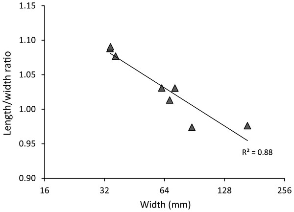 Carapace length/width ratio vs. log2 carapace width (mm) for extant Maguimithrax spinosissimus (Lamarck, 1818).
