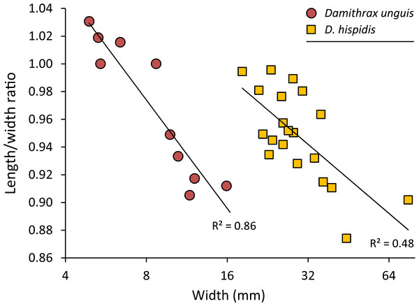 Carapace length/width ratio vs. log2 carapace width (mm) for Damithrax unguis (Portell & Collins, 2004) from the lower Miocene of Jamaica vs. modern Damithrax hispidus (Herbst, 1782–1804) from Florida.
