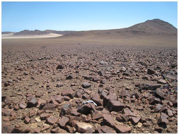 Study site in eastern Goboboseb Mountains, northwestern Namibia.