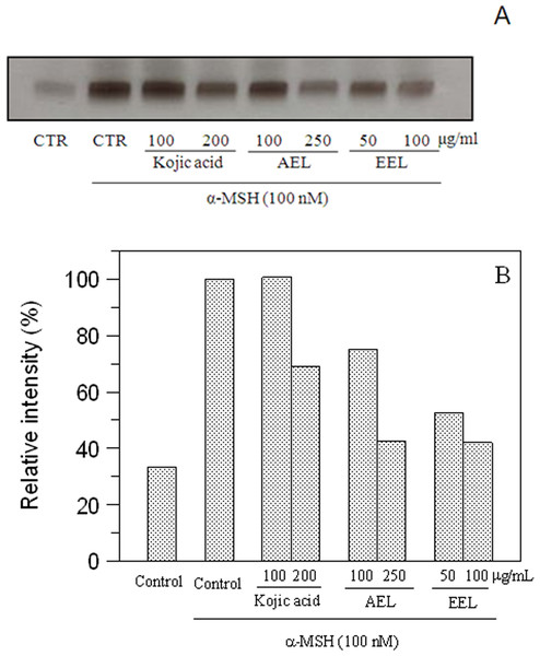 Effect of leaves extracts on B16F10 cells by L-DOPA staining.