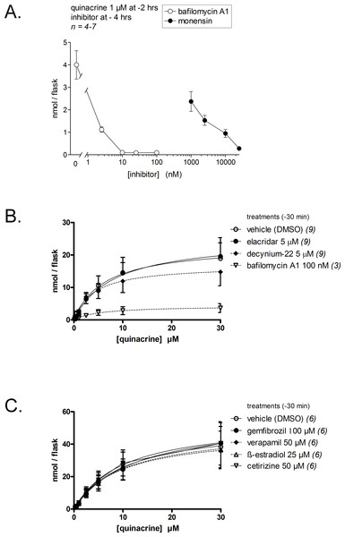 Effect of inhibitory drugs on quinacrine accumulation by dermal fibroblasts.