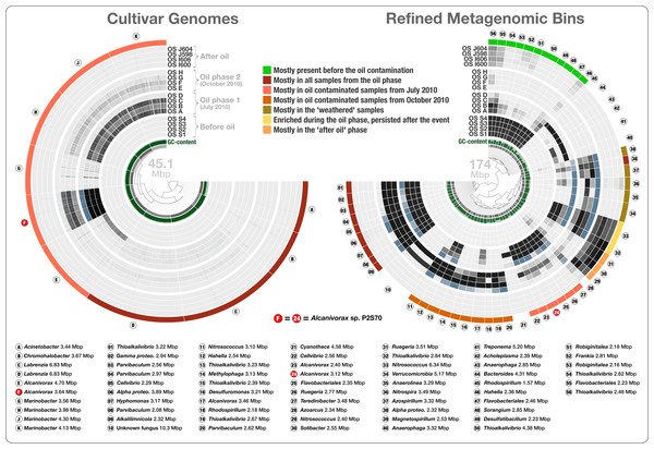 Overholt culture isolates linked to the Rodriguez-R metagenomes of the beach sand microbial community.