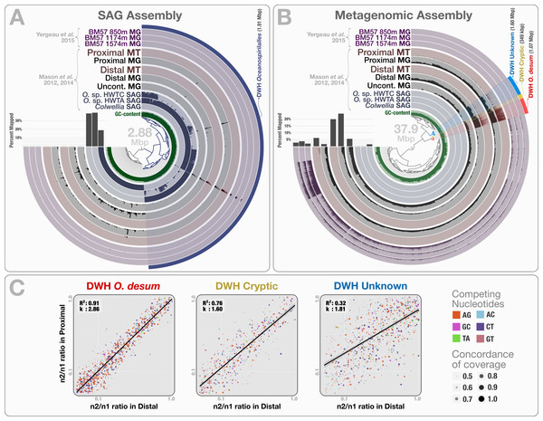 Mapping of samples to SAGs and metagenomic assembly, and nucleotide frequencies and identities of variable positions in three bins.