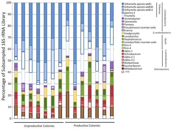 Bar chart showing diversity of bacteria within each sampled forager population.