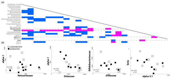 Correlated abundance profiles for Orbaceae and other bee specific groups.