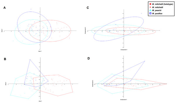 CVA and PCA scatters for all 3 species of Mesacanthus with 95% confidence ellipses (A and C) and convex hulls (B and D).
