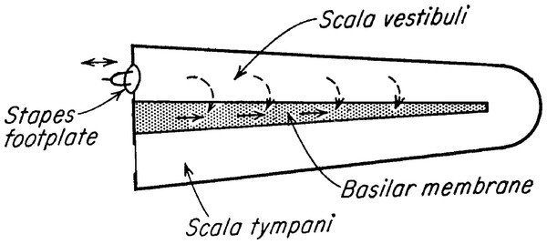 Békésy's diagram of the two ways by which sound can stimulate the cochlea.