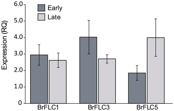 Expression of BrFLC genes.