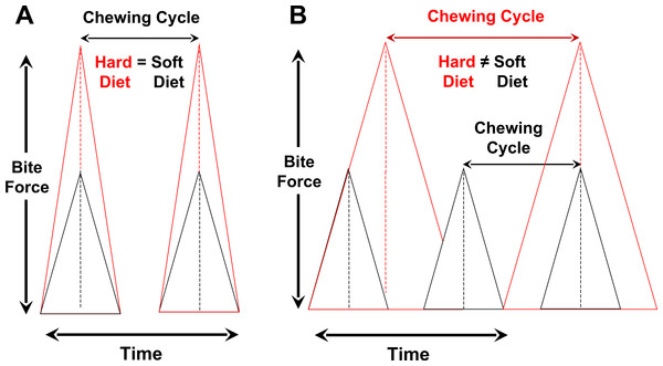 Relationships among bite-force magnitude, chewing cycle length and chewing frequency when the latter two parameters are the same for hard or tough vs. soft foods (A) or different between such foods (B).