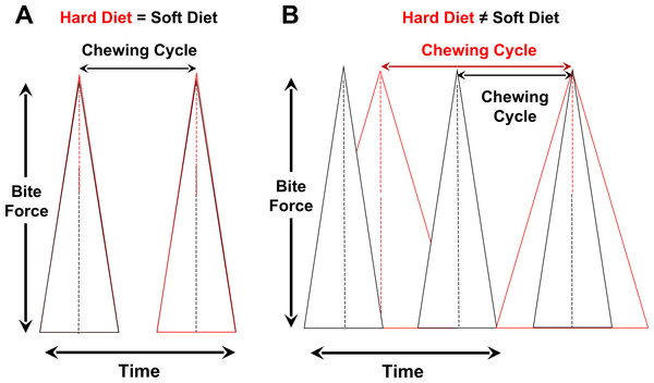 Controlling for variation in bite-force magnitudes, hypothesized relationships between chewing cycle length and chewing frequency when both parameters are the same for hard/tough vs. soft foods (A) or different between such foods (B).